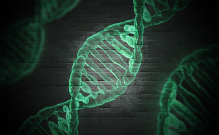 Epigenetica e dna