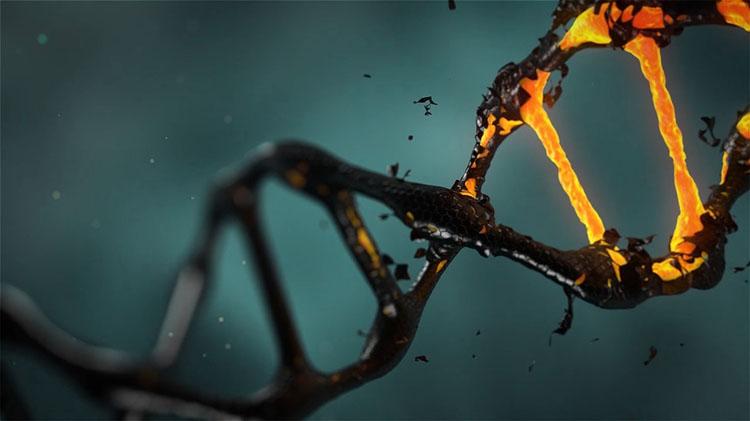 Proteine dna ed epigenetica