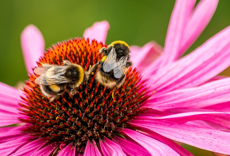 Polline congelato un super alimento
