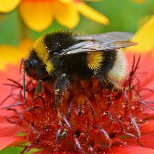polline congelato