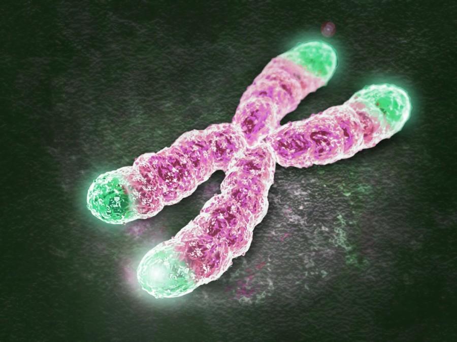 telomeri e come agiscono sull'invecchiamento